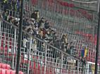 A Mezőkövesd szurkolói a DVSC-Mezőkövesd meccsen - haon.hu
