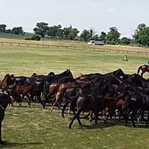 Méneshajtás a mátai lovaspályán